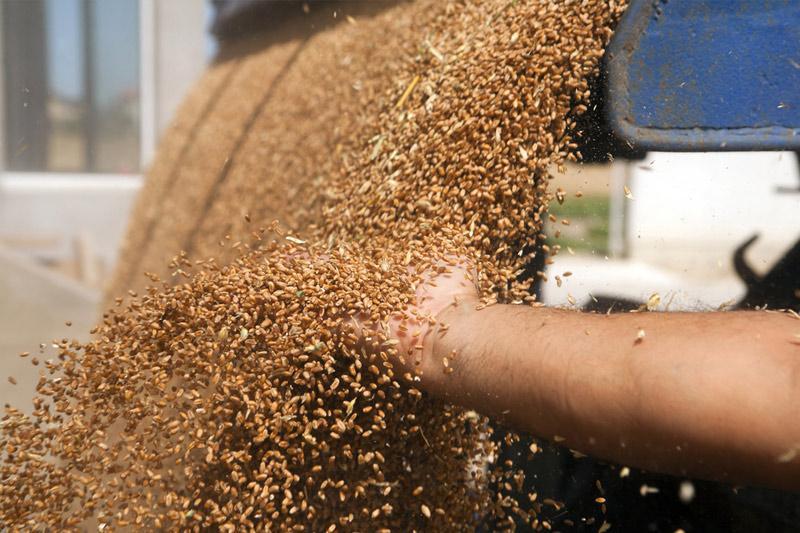 прогноз урожая зерна