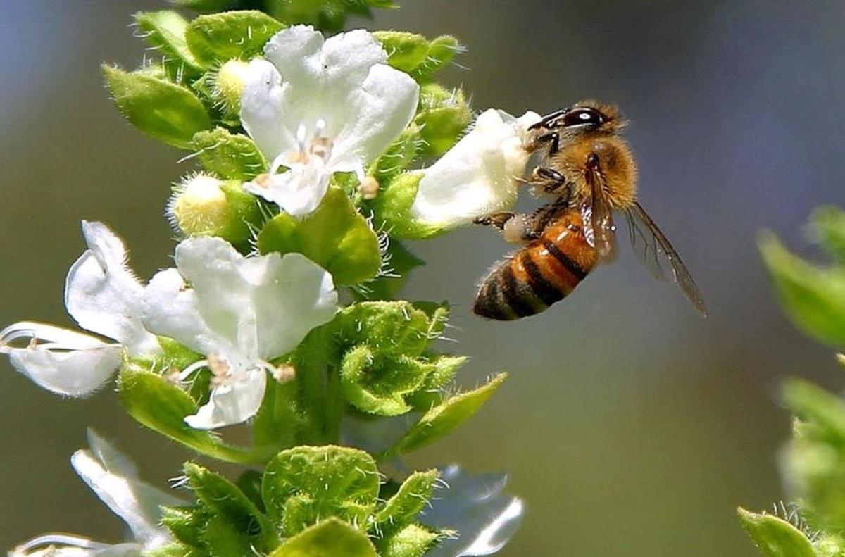 цветущие угодья для пчел