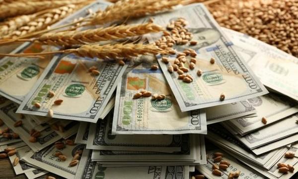 Котировки пшеницы выросли
