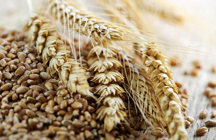 поставки зерна