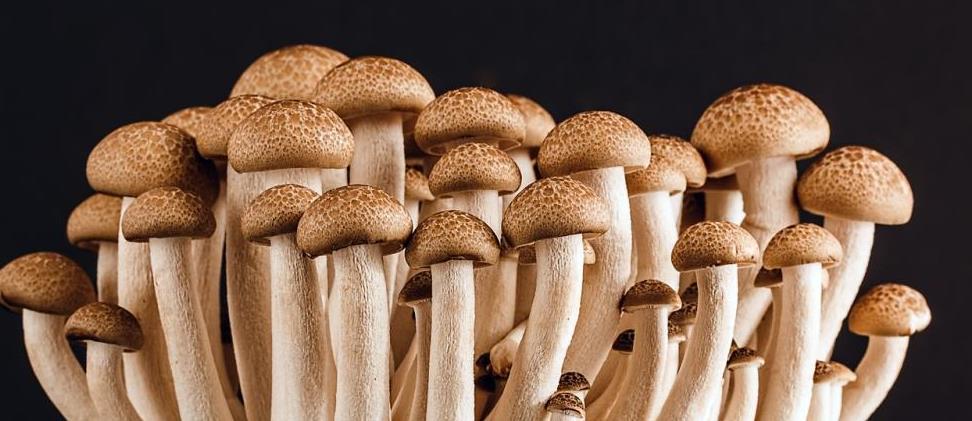 грибоводство