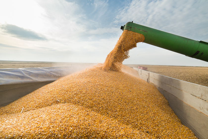 объем собранного зерна